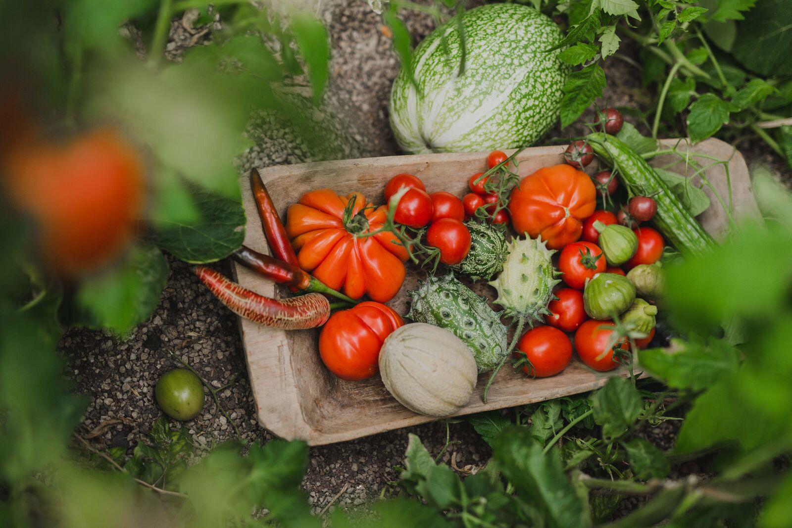 grönsaker. detalj jana